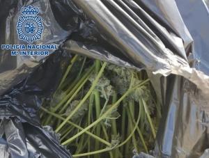 Una de las bolsas con marihuana requisadas en Lancha del Genil.