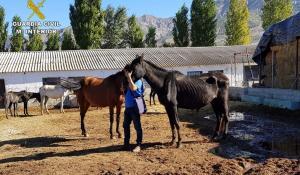 Algunos de los caballos, con visible desnutrición.