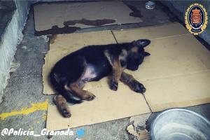 La primera imagen que vimos del pequeño cachorro tras ser rescatado.