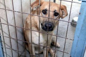 Uno de los perros alojados en el centro provincial.