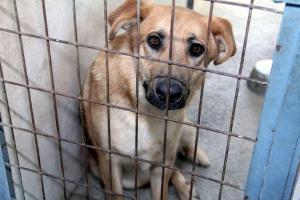 Imagen de archivo de uno de los perros alojados en el centro provincial de Diputación.