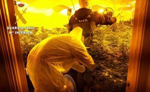 Agentes, en uno de los cultivos de marihuana.
