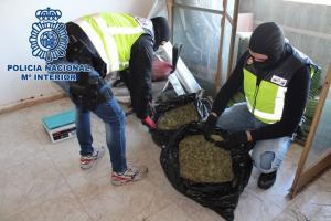 Agentes requisan marihuana en una de las viviendas de la zona Norte.