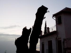 Un árbol desmochado en la Cuesta de Alhacaba.