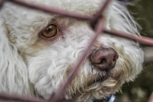 La asociación de letrados velará por los derechos de los animales.