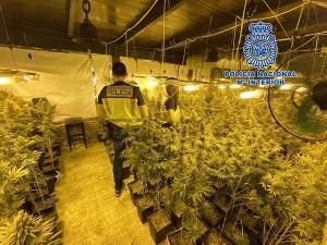 La casa se había reformado para facilitar la plantación de la droga.