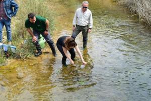 Suelta de alevines de trucha en el río Cacín.