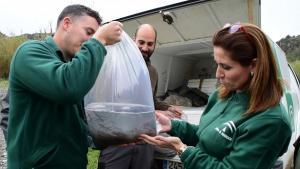 Una de las bolsas con alevines de anguilas.