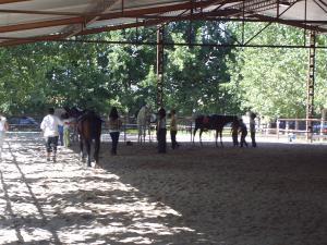 Actividad con caballos realizada con hijos e hijas de víctimas de violencia de género financiada por el Ayuntamiento de Granada.