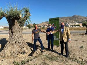 Uno de los olivos Lucio milenarios, en Atarfe.