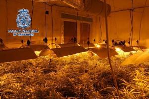 La plantación tenía más de 40 lámparas halógenas.
