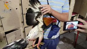 Uno de los gallos pelados y descrestados por el investigado.