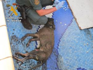 El perro fallecido, tras ser sacado de la piscina.