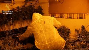Uno de los cultivos de marihuana hallados en el edificio de la calle Molino Nuevo.