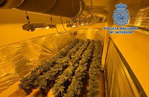 Una de las plantaciones halladas por la Policía.