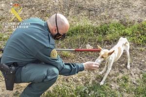 Un agente da agua al perro tras ser rescatado.