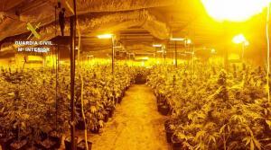 Plantación de marihuana en una nave de la Carretera de Armilla.