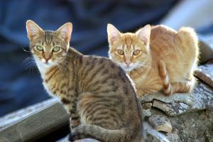La ayuda transporte, alojamiento y cuidado de los animales.