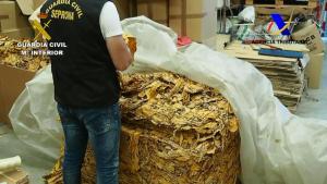 Hojas de tabaco intervenidas en Chauchina.