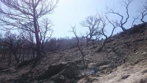 Devastación causada por el fuego en Lujar.
