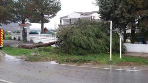 Uno de los árboles caído en Guadix.