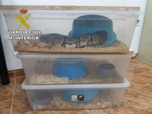 Serpientes ya recuperadas.