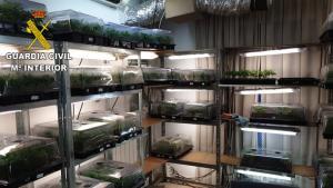Una de las habitaciones donde se cultivaban los plantones de marihuana.