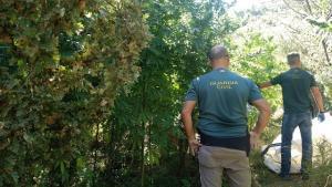 Agentes en una de las plantaciones descubiertas.