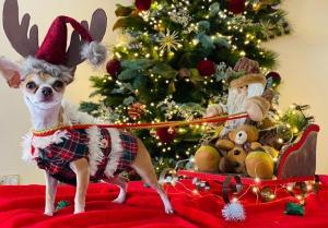 Foto ganadora del concurso, con la perra 'Pipa'.