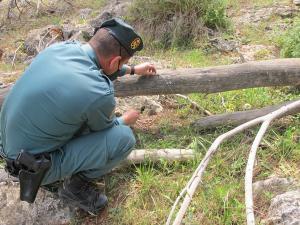 Un agente quita uno de los lazos de acero puestos por los cazadores.