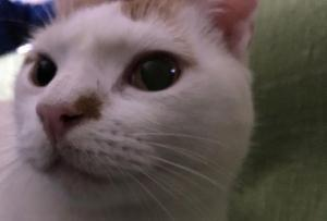 El gato José Mari, toda una celebridad.