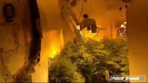 Plantas de marihuana en los trasteros desmantelados.