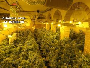 Plantación en el sótano del chalé de lujo.