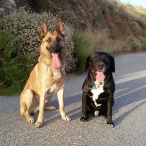 Negro y Otto, los perros policías locales de Almuñécar.