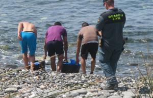 Las ortiguillas aún estaban vivas y fueron devueltas al mar.