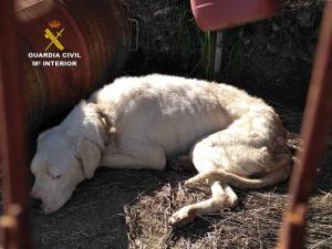 El perro, un dogo argentino, abandonado por su dueño.