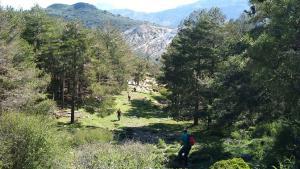 Pinares por el Cerro Huenes, en Monachil.