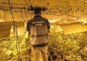 Imagen de archivo de una plantación de marihuana desmantelada.