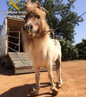 Al pony le habían crecido los cascos de forma desmesurada.