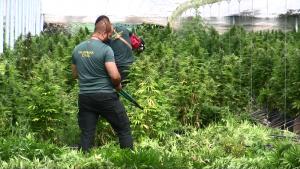 Invernadero de cáñamo transformado en plantación de marihuana.