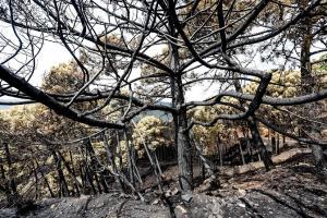 Una de las zonas quemadas por el fuego en Sierra Bermeja.