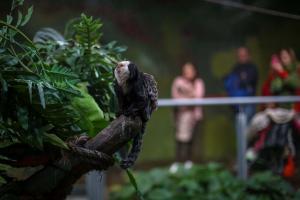 En los últimos meses se han incorporado nuevas especies, como el mono Tití de cara blanca.