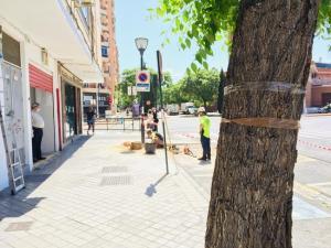 Las talas en calle Palencia han sido los primeros trabajos para iniciar la remodelación.