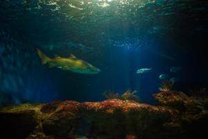 Imagen de un tiburón del Acuario de Almuñécar.