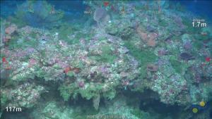 Imagen del nuevo arrecife de coral descubierto.